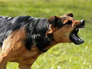 Gympie region dog attacks leave 22 people, animals injured