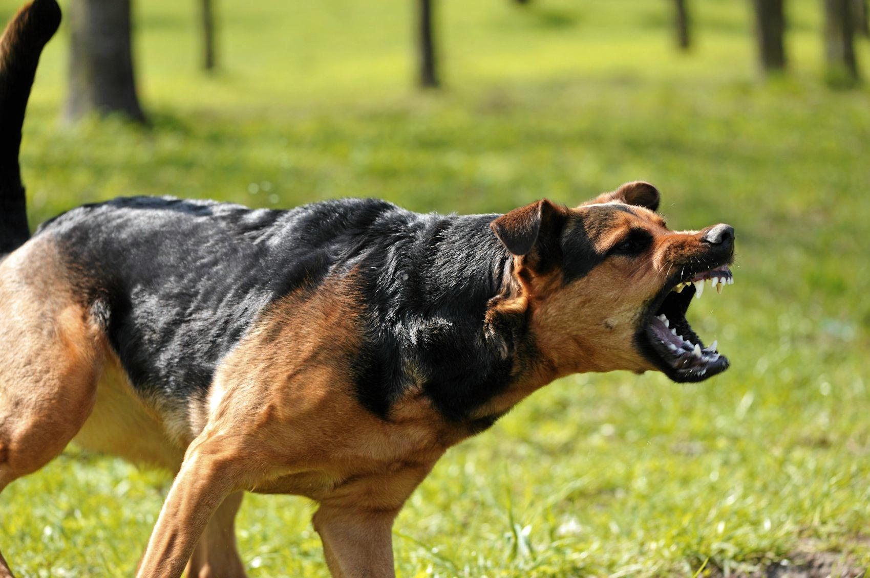 22 dog attacks have been recorded in the Gympie region this year so far.