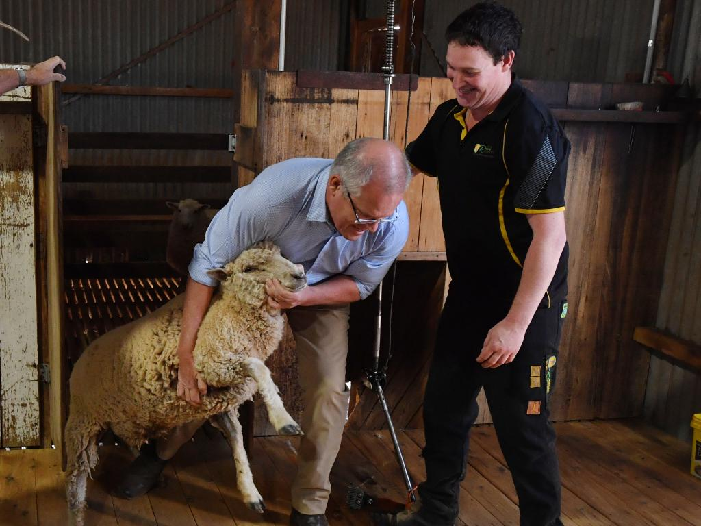 'Shhh, just let it happen': Scott Morrison defends his preference negotiations while shearing a sheep.