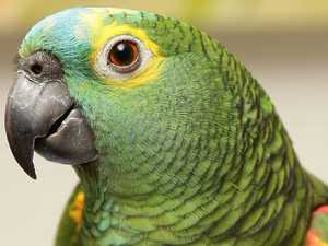 Parrot 'warns' drug dealer of bust