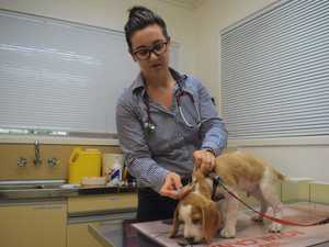 Spike in deadly dog virus sparks vet warning
