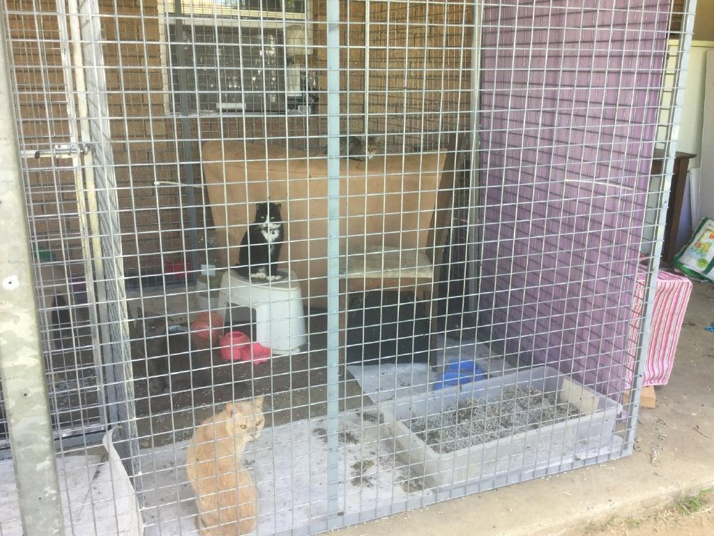 Foster cats and kittens were seized from this Caboolture property in November, 2018. Picture: RSPCA Qld