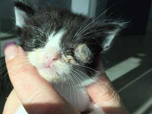 Eye 'fell out': Cats found in shocking state