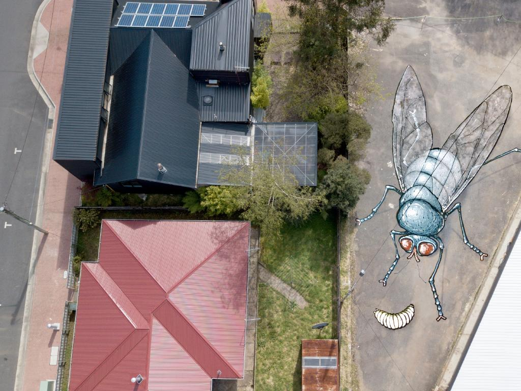 Bennett's mural of a fly blends into the landscape. Picture: Kitt Bennett