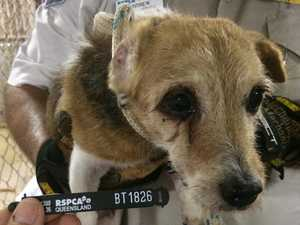 Jack Russells found in 'appalling' conditions
