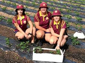Gympie could save Queensland - again
