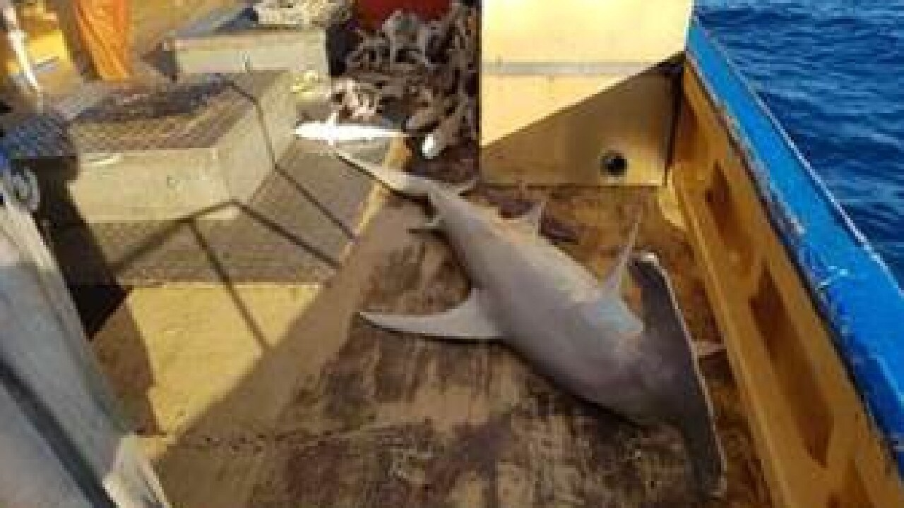 Leaked photos lay bare our shark shame | Morning Bulletin