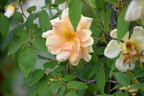 Flowers from Lauren Watts' Minden garden.
