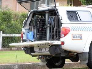 Dog squad catches battery thieves after bushland runner
