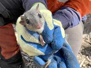 Safer journeys for threatened wildlife on the highway