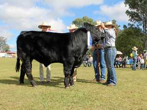 Farming fun to be had at the Blackbutt Show