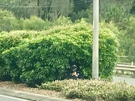 The officer was seen hiding in some bushes on the median strip. Picture: Facebook