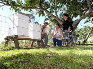 Unbee-lievable passion for bees when you hear her story