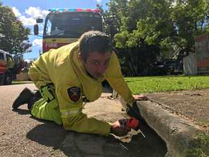 Cat stuck in Tin Can Bay storm drain