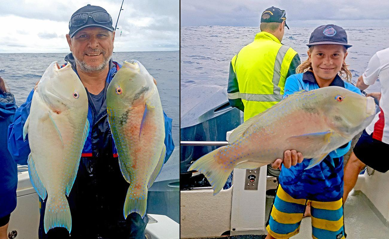 A few thumper venus tusk fish from a recent Wild Thing 2 charter to Double Island Point.