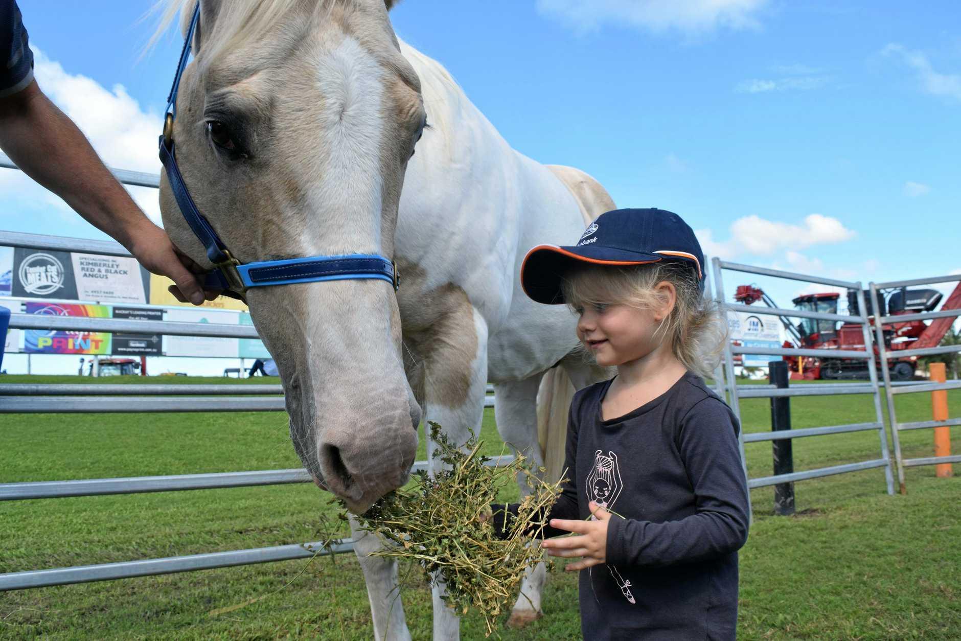 HORSE FAN: Olivia Hand, 3, feeds stallion Oakey at the Mackay Ag Trade Expo.