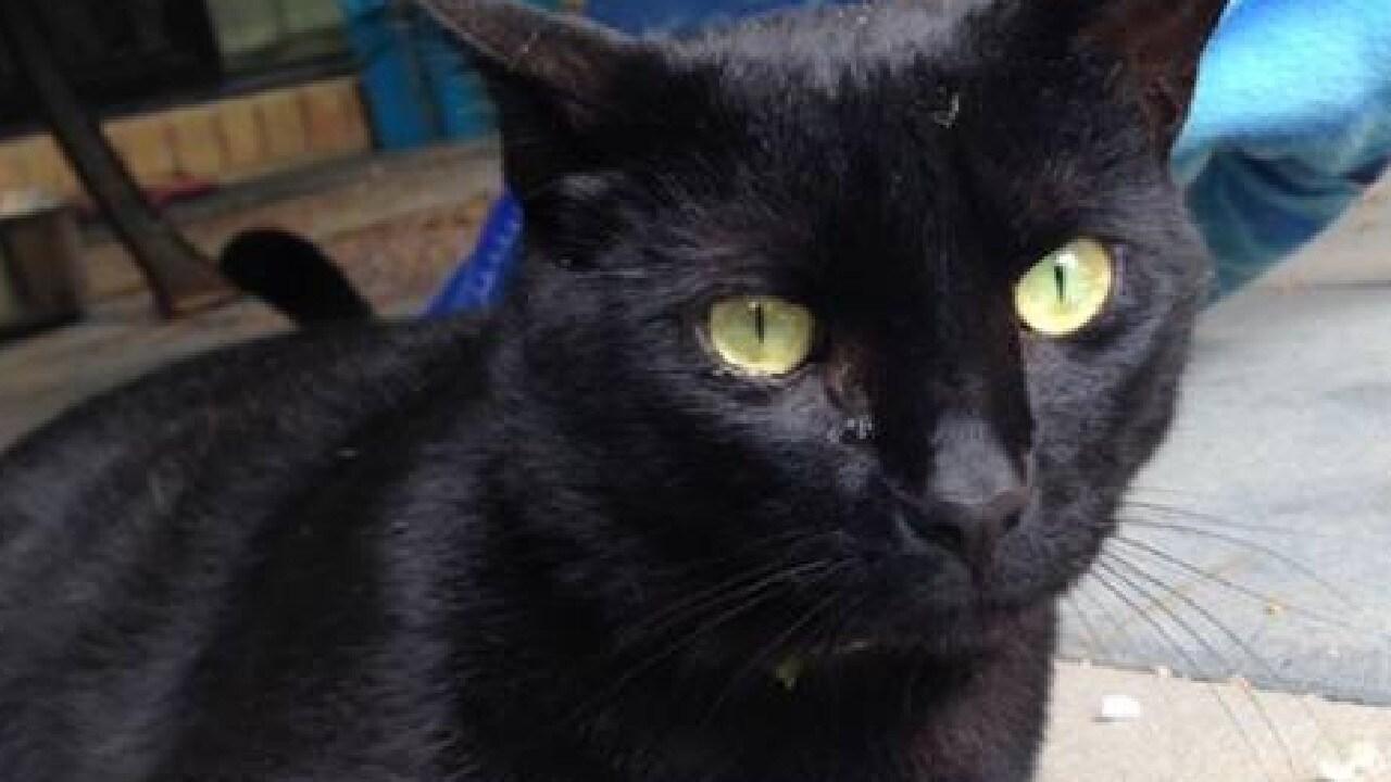 Rosie Rezaie, of Inala, had her cat Jet