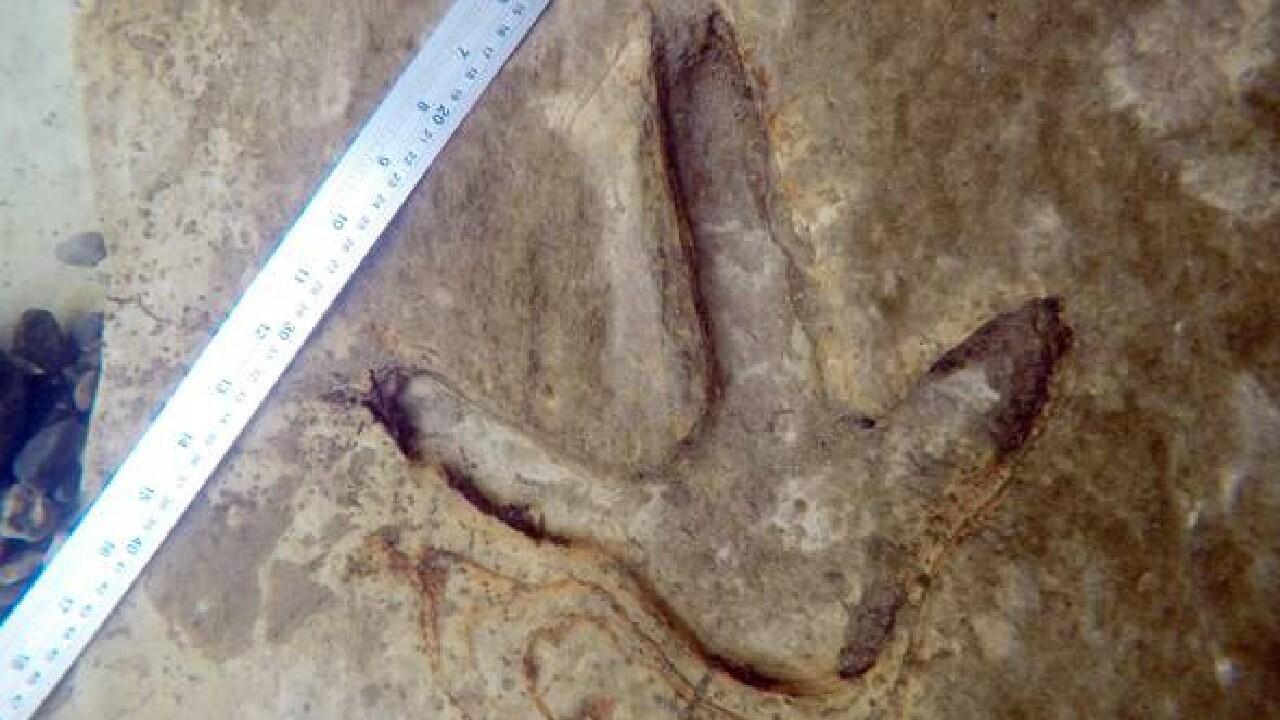 Set in stone … Moa footprints near Kyeburn.