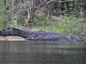Large croc spotted near freshwater swimming hole
