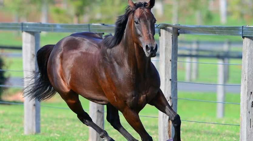 Champion racehorse Winx at her new home in southwest Sydney. Picture: Lisa Grimm