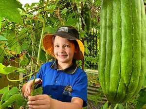 Gardening gurus eye first prize