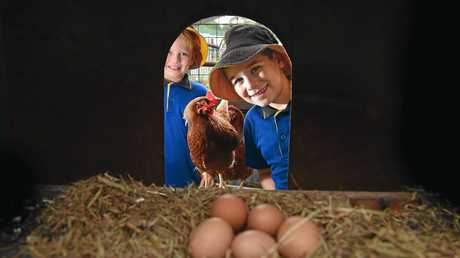 Cooper and Ryder, of Nambour State College, with the chickens.