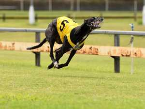 Greyhound racing at Thabeban Park