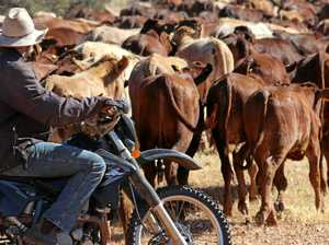 Cattle tick line review meetings in Burnett this week