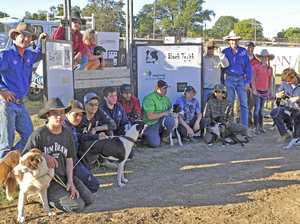 Grafton Show Junior Bush Dog Trials