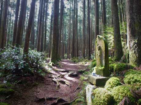 Many Australians enjoy hiking the Kumano Kodo. Picture: Supplied