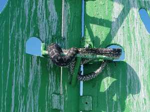 Snake clings to buoy for 3 weeks