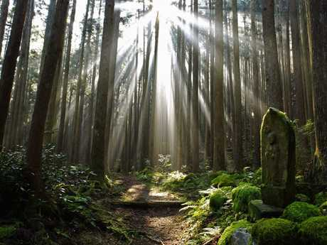 Kumano Kodo Japan. Picture: Supplied