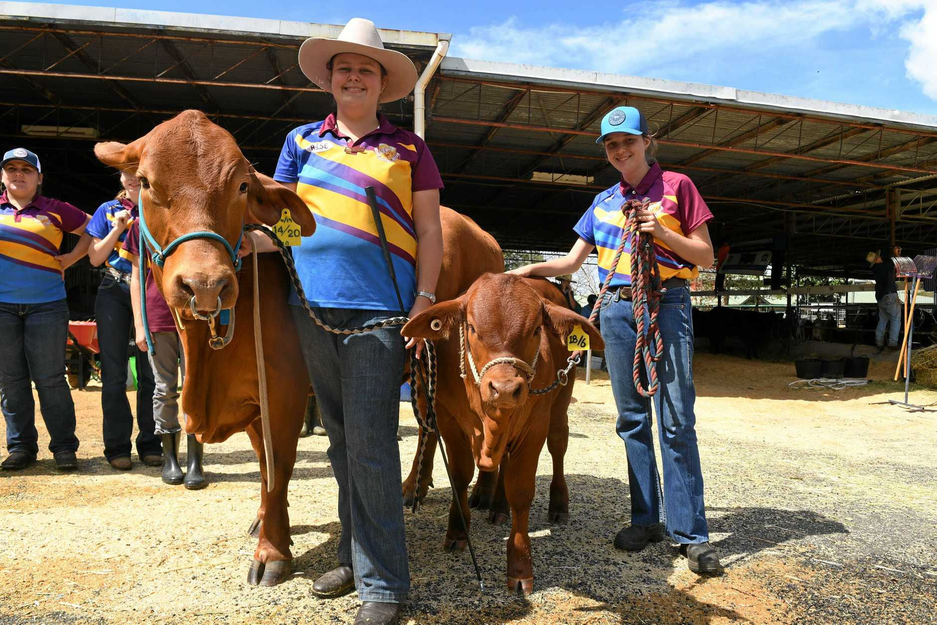 Chloe Andreassen, Brianna Van Doren from Gympie State High preparing there cow for show at the Gympie Showground