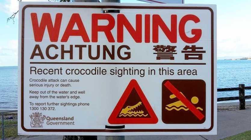 CRIKEY: Crocodile spotted off Mackay beach