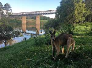 Authorities to consult on future of historic bridge