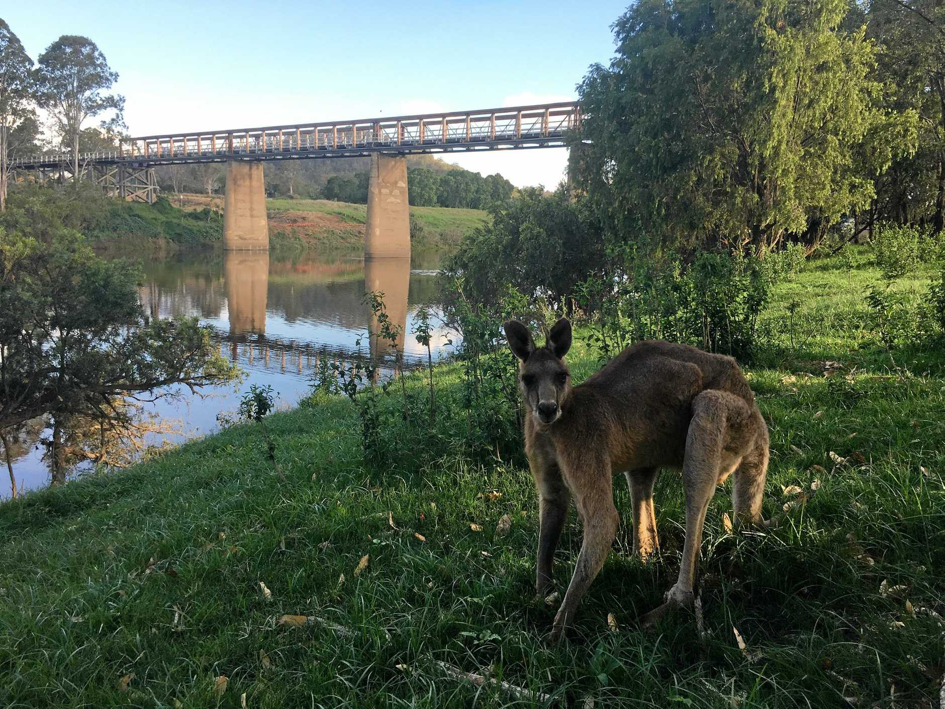 END OF AN ERA: Tabulam grazier John Cousins has started an indigenous and non-indigenous petition to protest the impending demolition of the historic Tabulam Bridge.