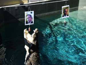 Burt, the psychic croc, picks the  election winner