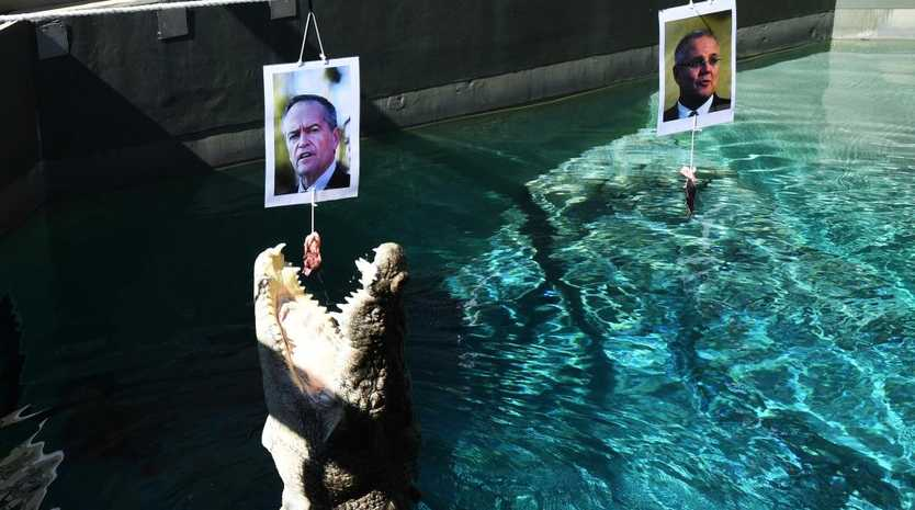 Burt the psychic croc  has predicted Opposition Leader Bill Shorten will lead Labor to victory in Saturday's federal election.  Picture: Katrina Bridgeford