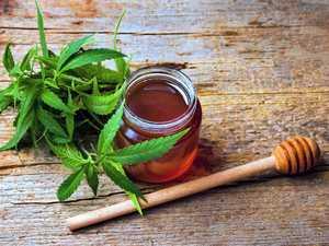 Ballina medicinal cannabis to be used for marijuana honey