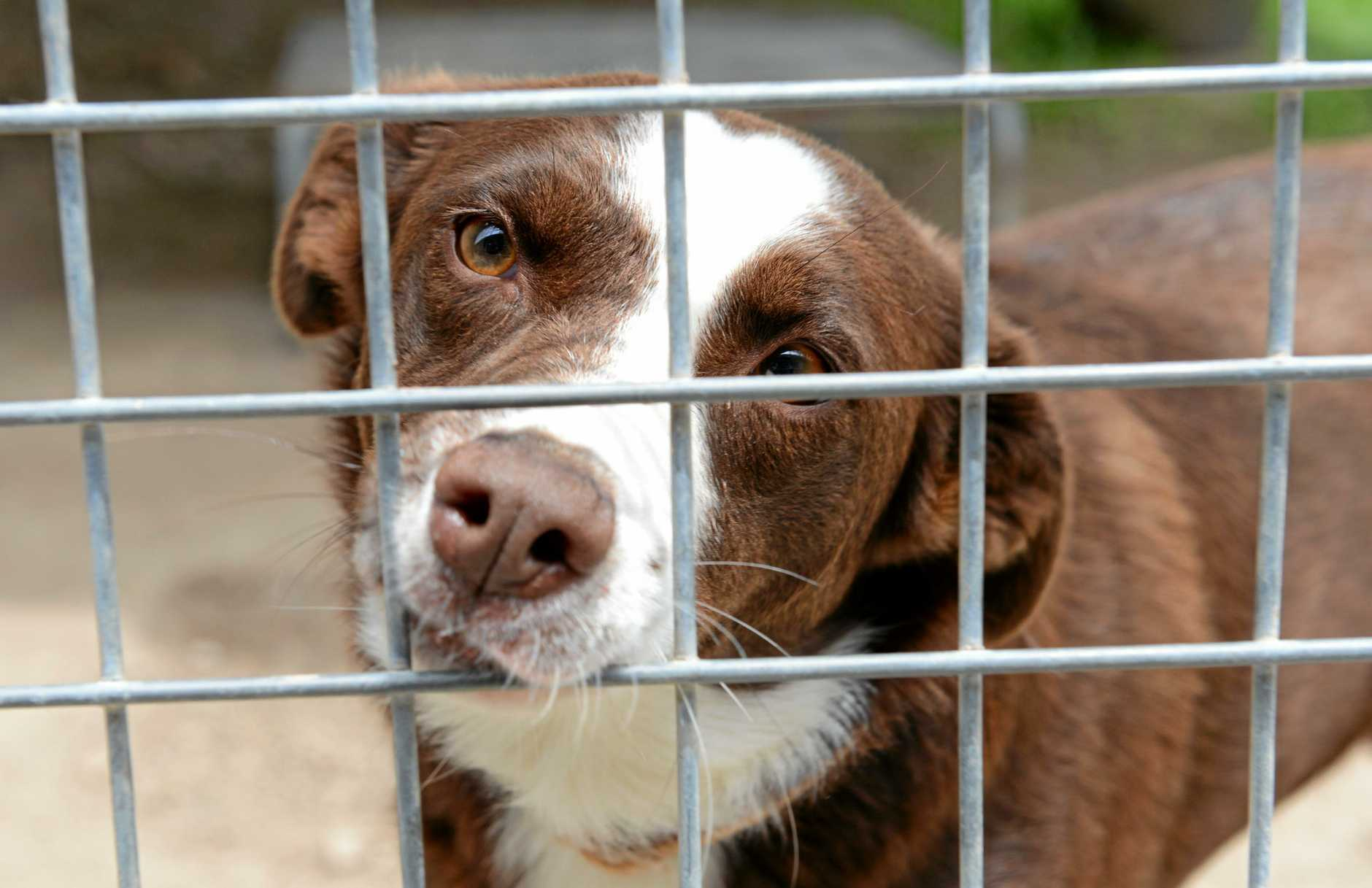 NEW HOME: Many animals like Pippy, have been housed at the Tweed Shire Pound while will be closed down in August.