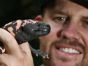 Venomous lizard brings monster appeal to Far North zoo