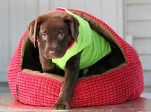 How you can help shelter animals be as snug as a bug