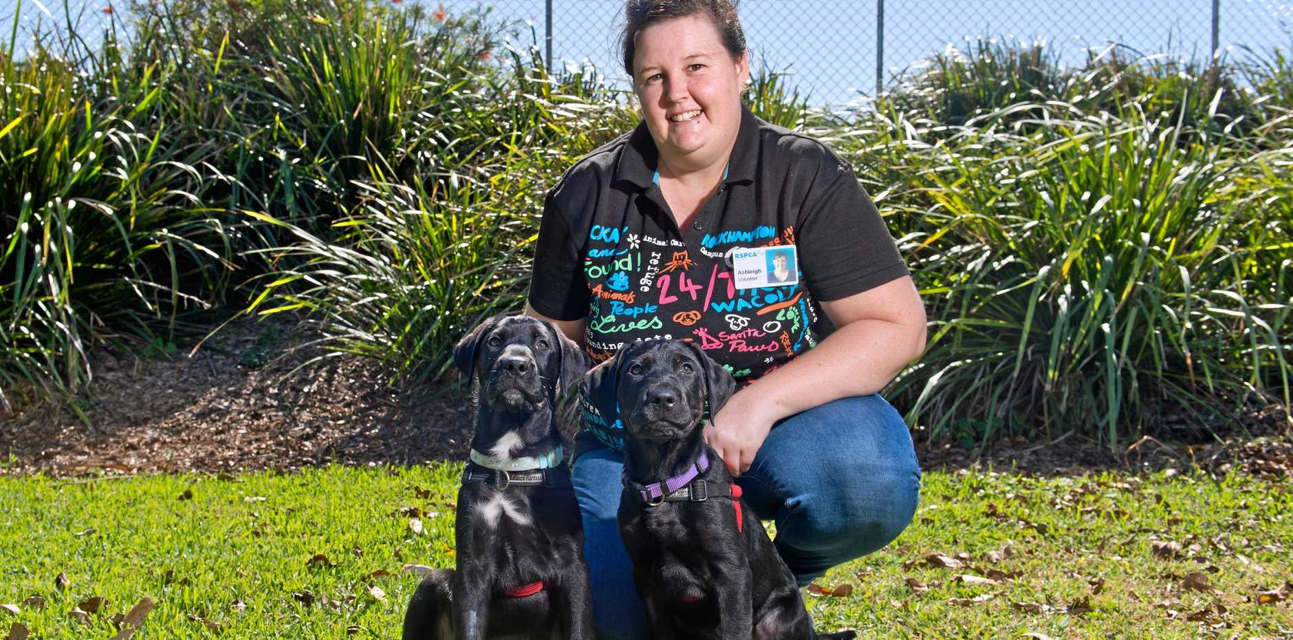 RSPCA volunteer Ashleigh Sunah with brothers Achilles and Shamus, who are available for adoption at the RSPCA.
