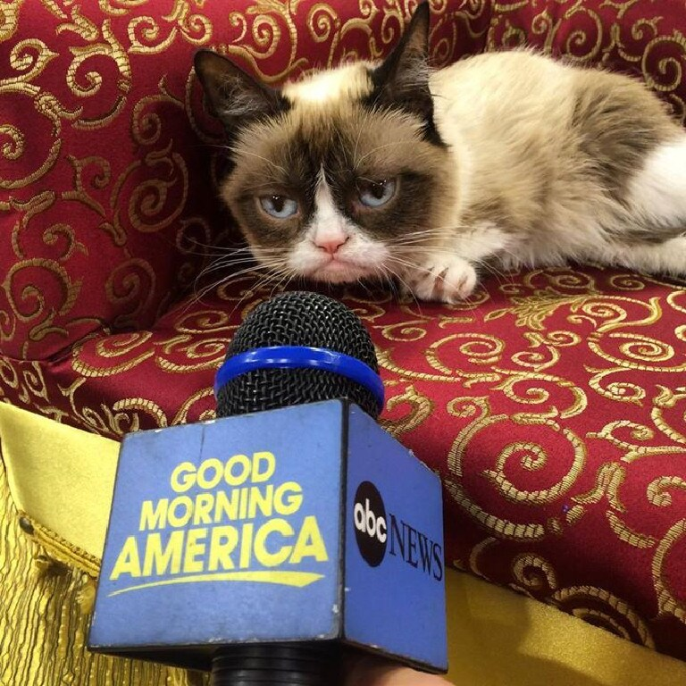 Grumpy Cat' made many TV appearances. Picture: Grumpy Cat Facebook page