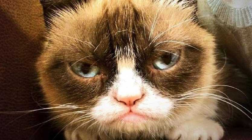 Grumpy Cat has died. Picture: Grumpy Cat Facebook page