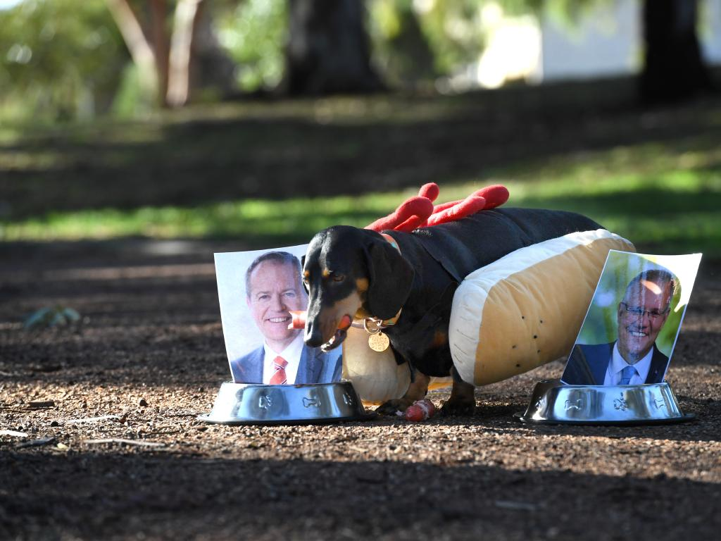 Eva the democracy sausage dog in Boothby. Eva firstly chooses Scott Morrison but after a few bites didn't seem to like his sausage so dropped it and tried Bill Shorten's which she finished off. Picture: Tricia Watkinson