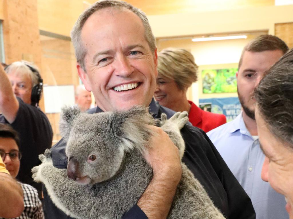 Bill Shorten holding Brandi the six year-old koala while attending Australia Zoo in Beerwah north of Brisbane. Picture: Liam Kidston