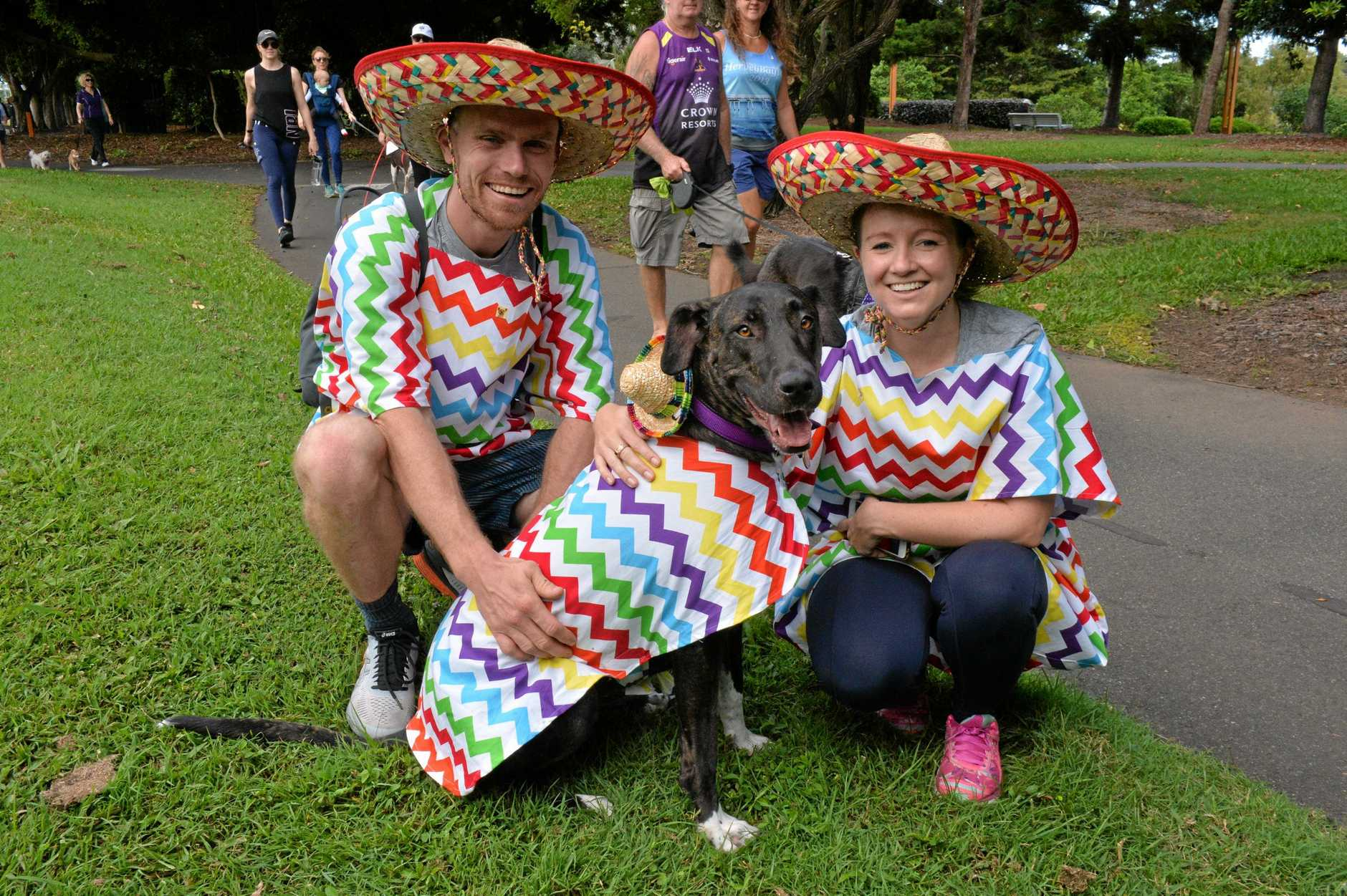 John Eddie, Jenna Eddy and their dog Pepper dressed in ponchos and sombreros for the Million Paws Walk on Sunday. Ms Eddy said the costumes were