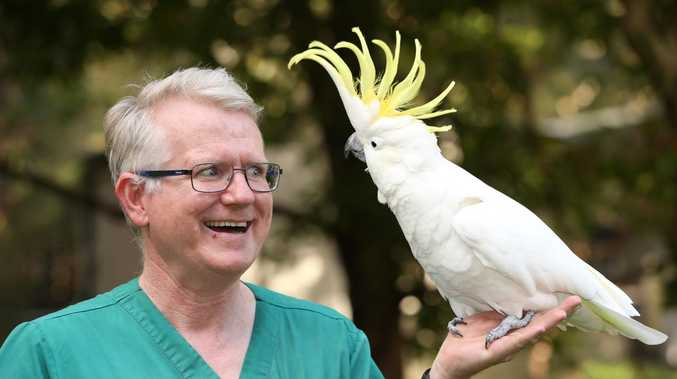 Why this cockatoo hates the vet who saved him