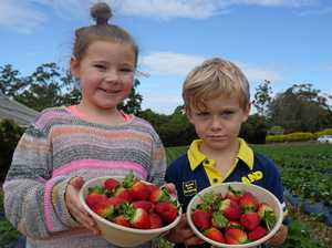 Delicious picks make for 'berry' good day out